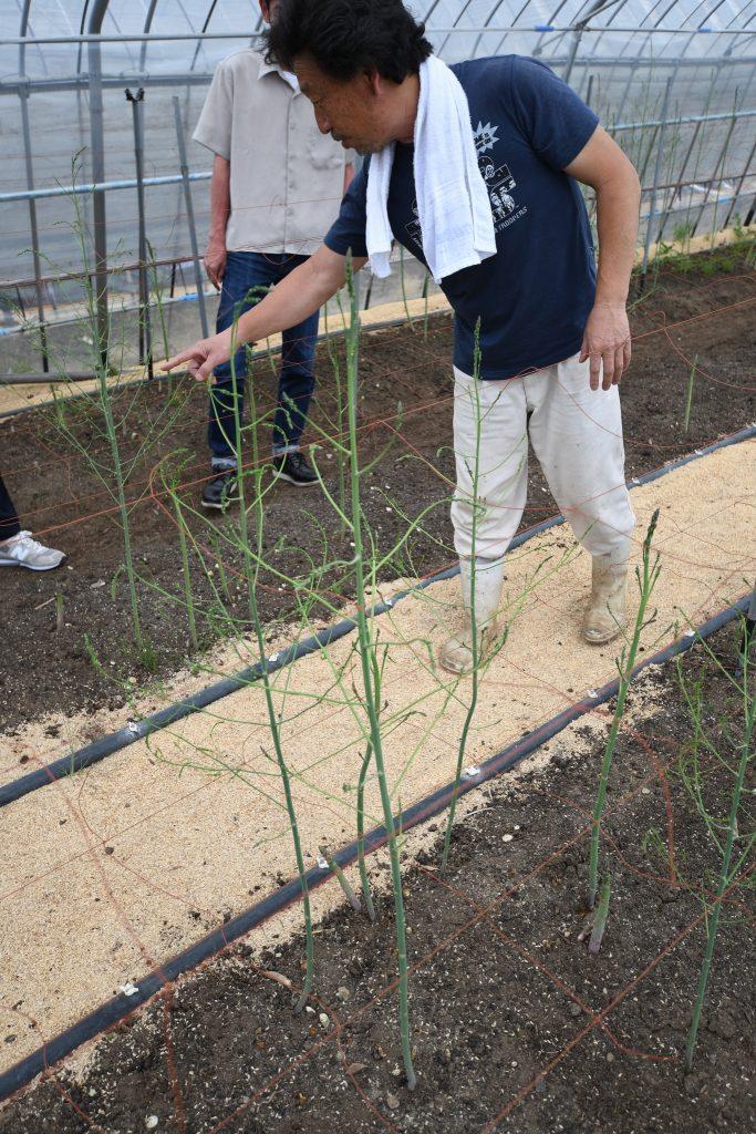 阿蘇のアスパラ農家、藤原農園